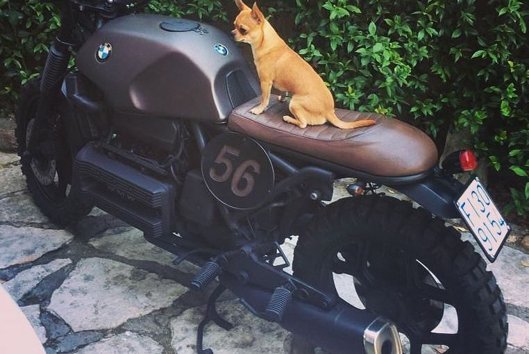 By @carmine_porcaro And a crazy dog on his toy#k100